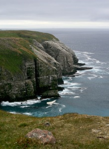 The reserve, boasting stunning cliffs and vast tundra, has more than 50,000 breeding seabirds and stunning landscapes.