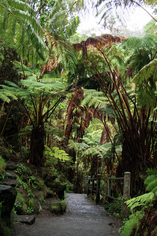 "The tree fern forests of Hawaii Volcanoes National Park had a ""jurassic"" vibe."