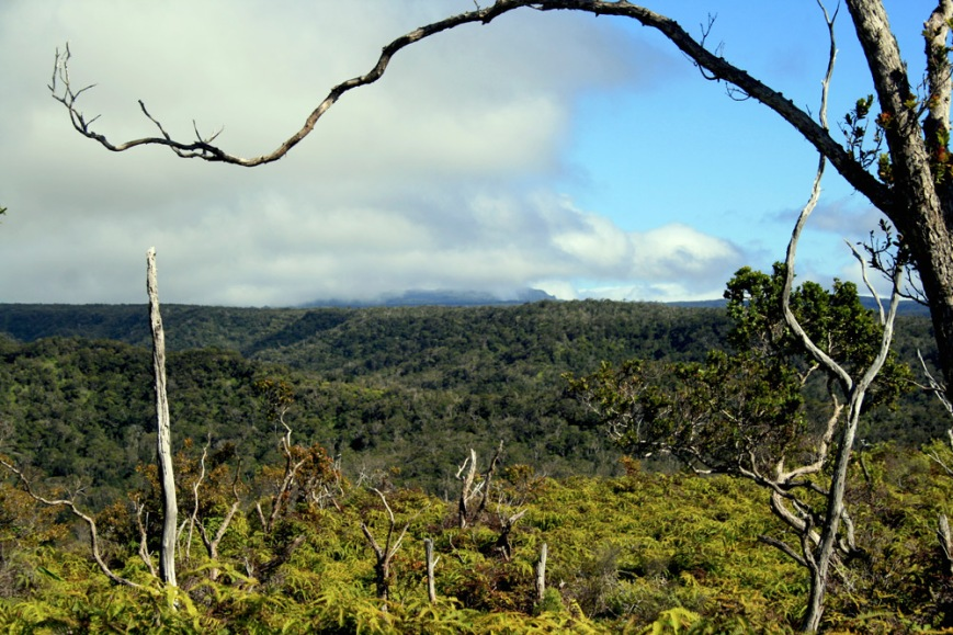A view of Wai'ale'ale - a mountain peak that is one of the wettest places on earth - from the Alaka'i Swamp trail.