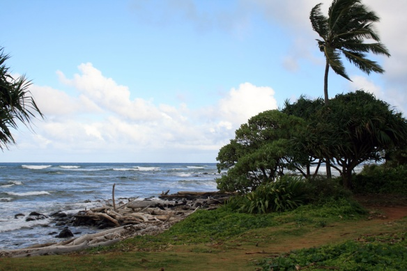 A driftwood beach and thick, green grass in Wailua, just behind our hotel.