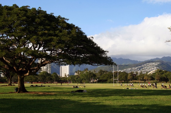 Kapiolani Park offers some wonderful birding, right in the middle of beautiful Waikiki, Honolulu.