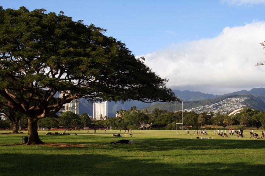 Kapiolani Park offers some wonderful birding, right in the middle of beautiful Waikiki, Honolulu.