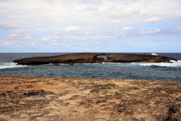 A natural sea arch lies just offshore at La'ie Point -- and just beyond that we were thrilled by a Masked Booby circling and plunge diving!