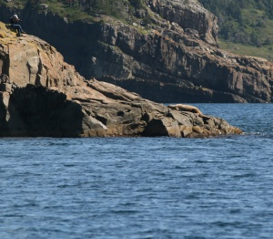 My first glimpse of the Walrus as we approached its perch. (Note the photographer on the rocks above.)