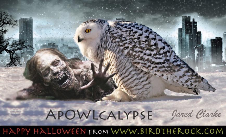 ApOWLcalypse_Halloween