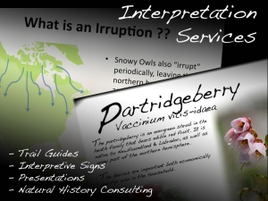 InterpServices