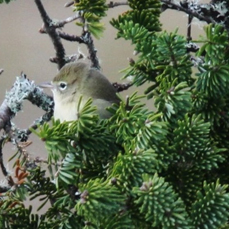 "This ""mystery bird"" was photographed by Cliff Doran on November 14th. Can you guess what it is?"