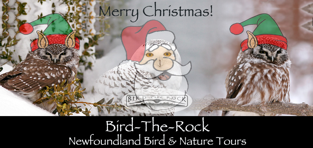 BTR_ChristmasBanner