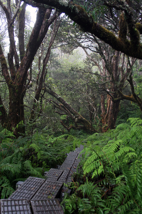 The lush rain forests of Waikamoi Nautre Preserve are home to many native and endangered species ... including some very rare birds!
