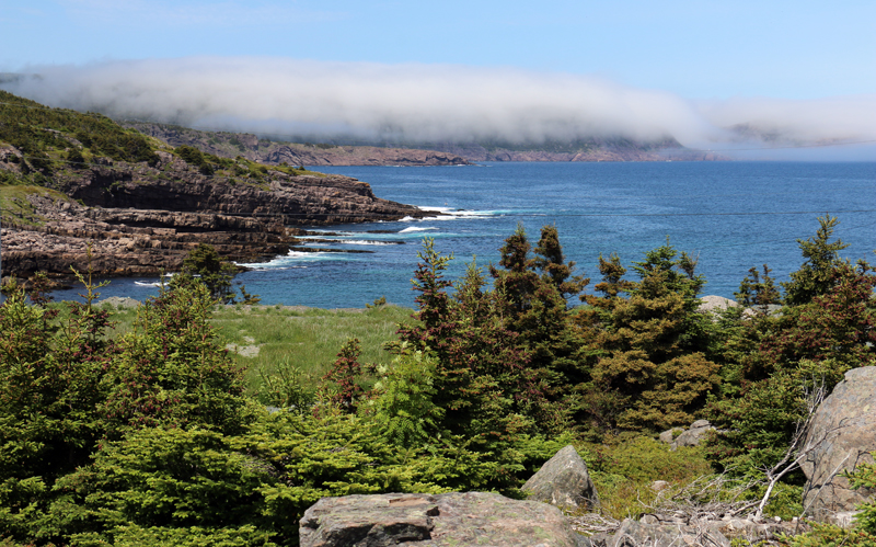 Fog sits over the cit of St. John's on an otherwise beautiful, sunny day. Fog is never far away along our coast, and can add a touch of character to our already stunning scenery!