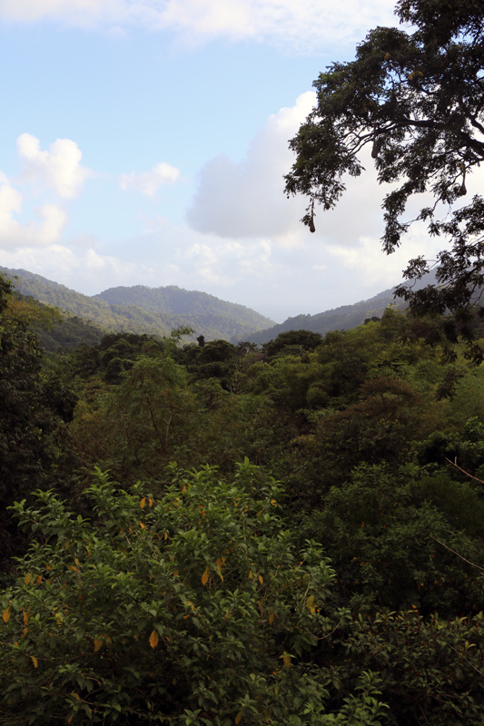 The view from the veranda at Asa Wright Nature Centre looks down over a lush valley in Trinidad's Northern Range. Lots of great birds and other wildlife in there!!