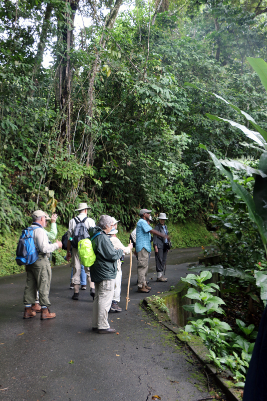The estate offers lots of great birding right on site - property around the lodge, amazing trails, and even the road.