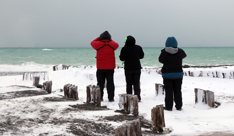 WINGS tour participants scan for seabirds at wintery St. Vincent's beach on January 15.