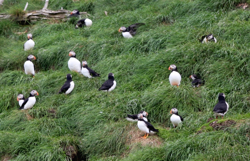 "One obvious highlight was our boat tour to the Witless Bay Ecological Reserve, where we experienced (not just ""saw""!) North America's largest colony of Atlantic Puffins. It never disappoints."