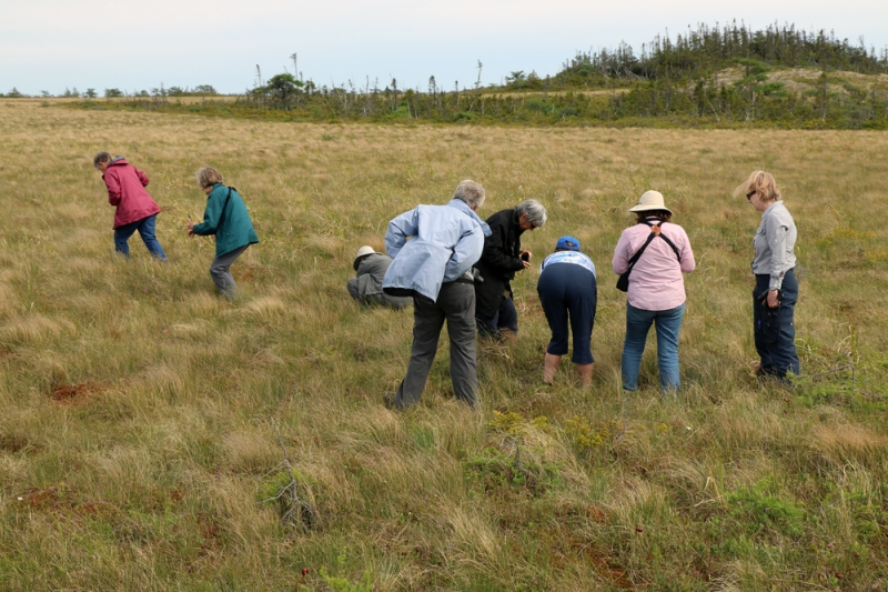 Another favourite landscape for our group was the vast bogs that Newfoundland has in spades.