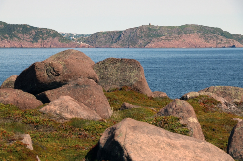 One of our first stops was at Cape Spear National Historic Site = not only the easternmost point of land in North America, but also a great place to look for birds. We were rewarded with four Sooty Shearwaters - some of the first reported this summer!