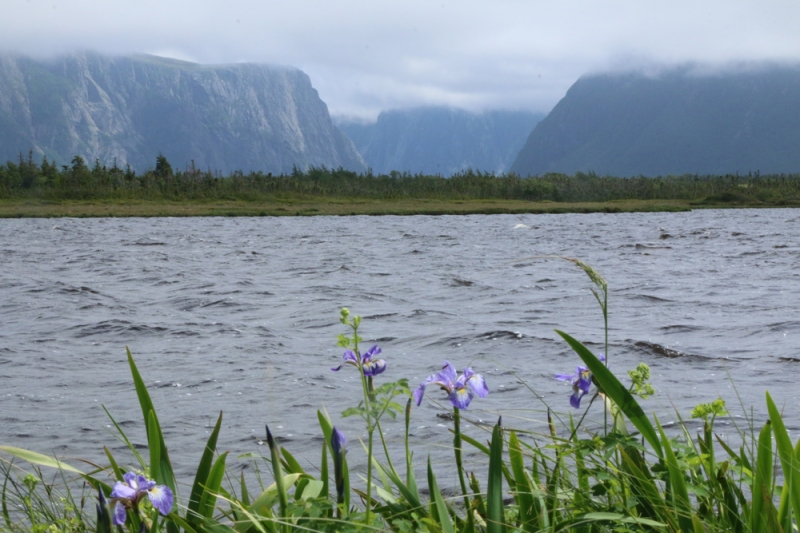 Western Broom Pond, an ancient landlocked fjord, is a pinnacle of the park's amazing scenery. Our hike took us through forests and over bogs to this beautiful place - with lots of birds and wildflowers along the way.