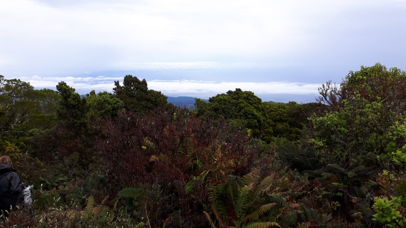 Our next stop was the island of Maui, where we visited the lush rainforests of Haleakala.