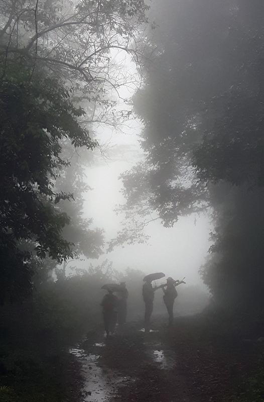 FoggyForest_Honduras