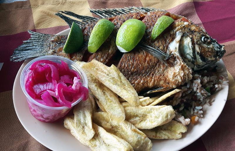 Tilapia_Honduras