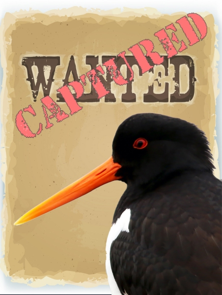 EUOY_Wanted