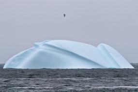 Iceberg_May232019_6301